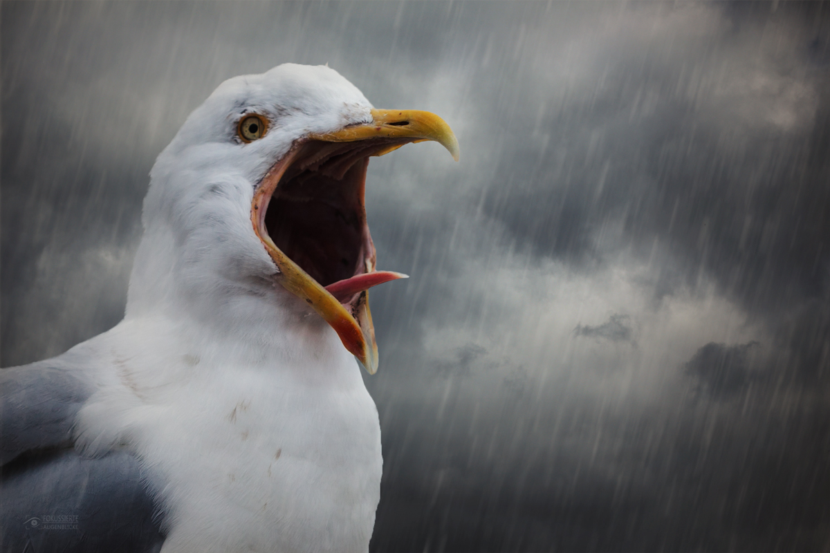 Singing oder crying in the rain....?