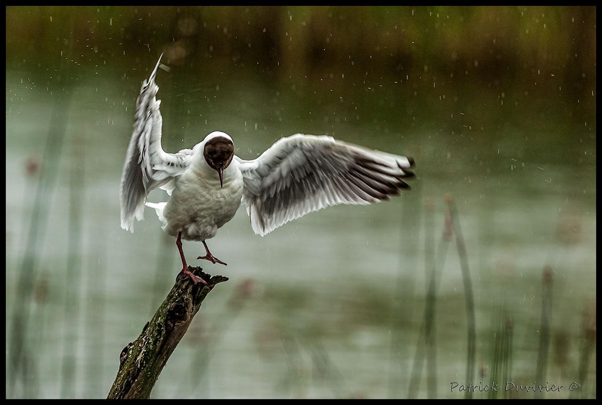 singing-under-the-rain