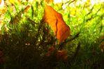 Single Leaf II