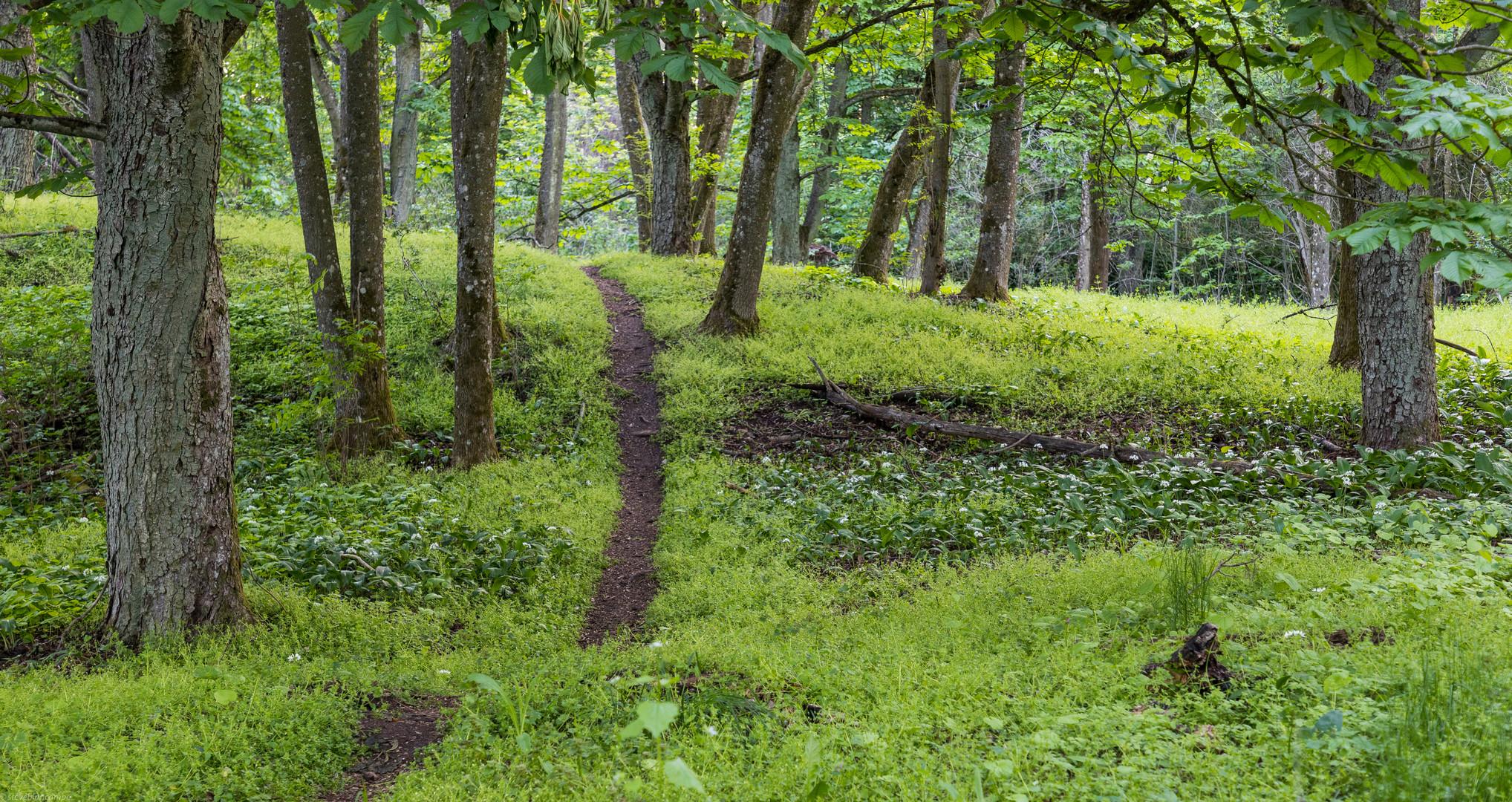 Single Trail im Frühlingswald