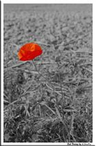 Singled Red