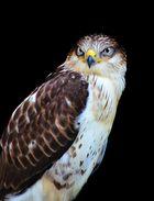 Sinister bird of prey....