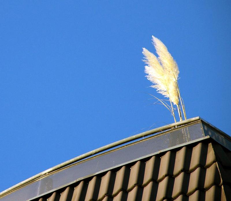 Sir Ivanhoe auf dem Dach?