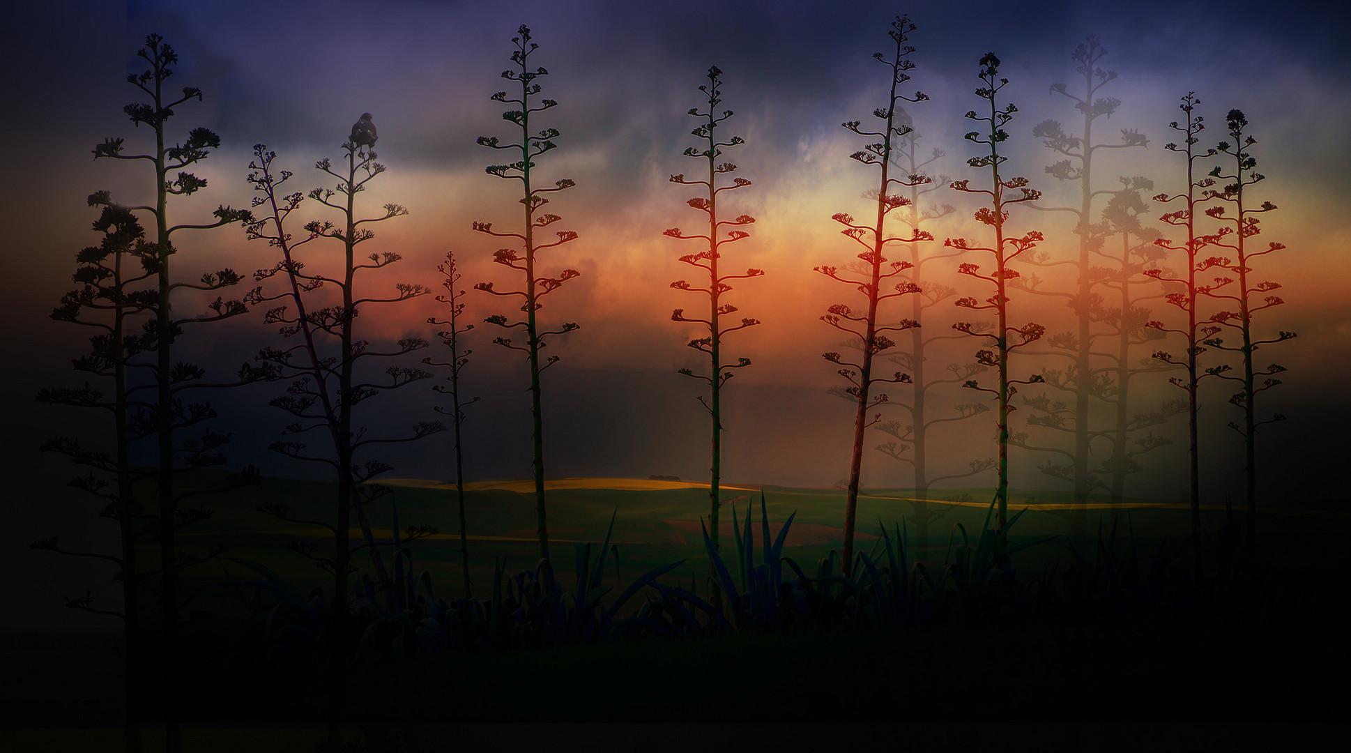 sisal bl ten foto bild sunset world natur bilder auf fotocommunity. Black Bedroom Furniture Sets. Home Design Ideas