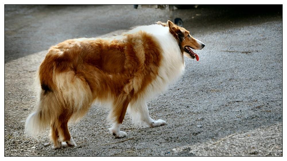 Sissi, la cagnolina della mia cugina.