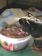 Sissy blünderte ihr Sparschwein !