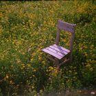 Sit and enjoy (analog)