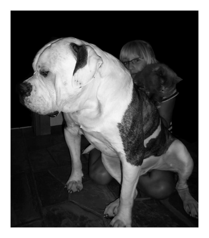 sitting bull(dog) 2.