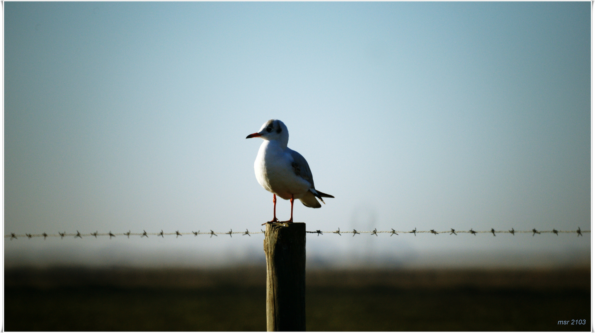 Sitting on a fence