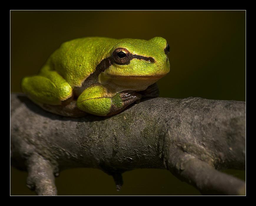 Sitzen an Zweig und ich fühle mich wohl :o))