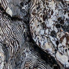 Sizilien - Nr. 11 - Ätna - Vulkanlandschaft - verkohlter Baumstamm