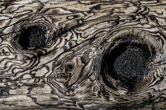 Sizilien - Nr. 12 - Ätna - Vulkanlandschaft - verkohlter Baumstamm