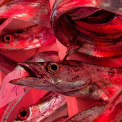 Sizilien - Nr. 18 - Fischmarkt in Catania