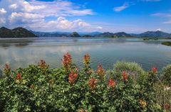 Skadarska Jezero 2