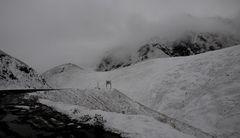 Skalebel Pass 3615 m.