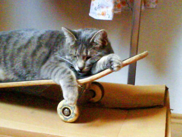 Skateboard fahren macht müde