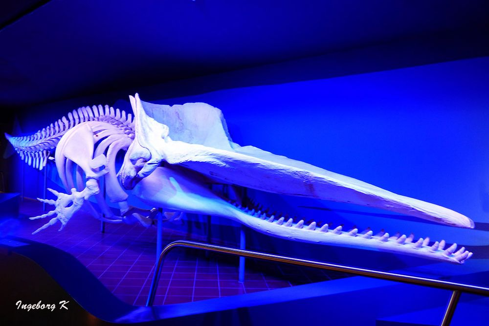 Skelett eines uralten Krokodils