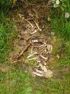 Skelett im Wald
