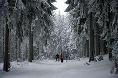 Skiwandern im Märchenwald