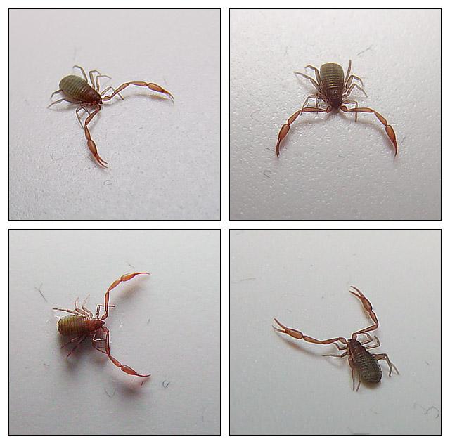 Skorpion im Badezimmer.... Foto & Bild | tiere, wildlife ...