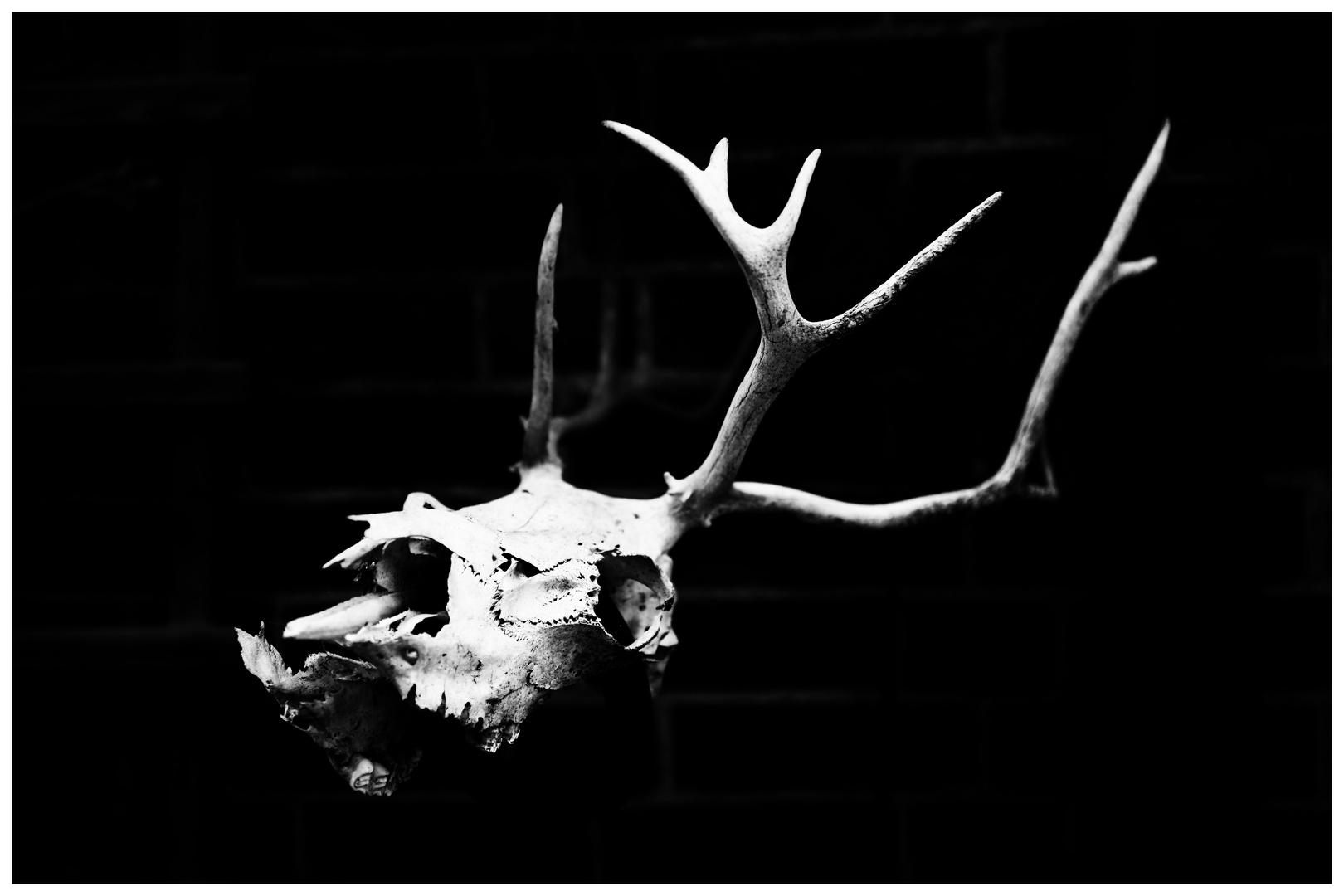 Skully the Hirsch