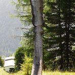 Skulptur aus Holz auf dem Wanderweg