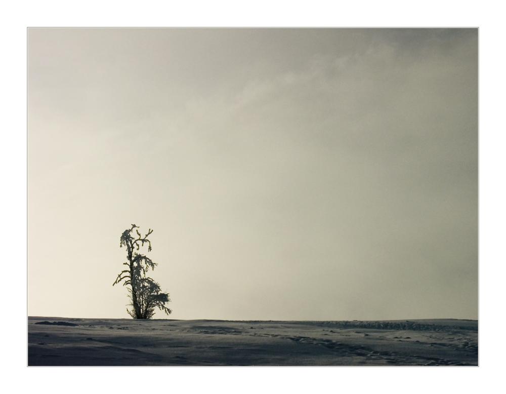 Skuriles Schattentheater : Was hockt denn da auf dem Baum... ? ;-))