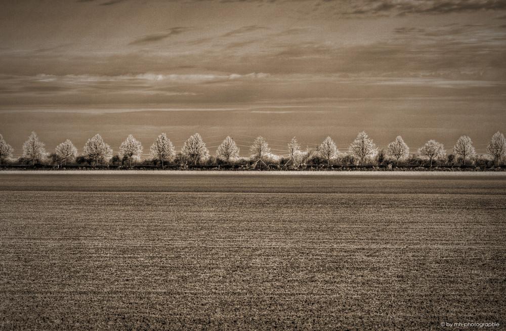 .:: sky - line II ::.