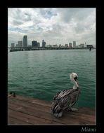 Skyline - Miami