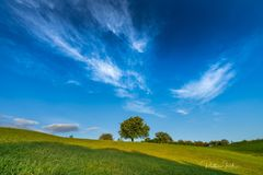 Sky:Tree