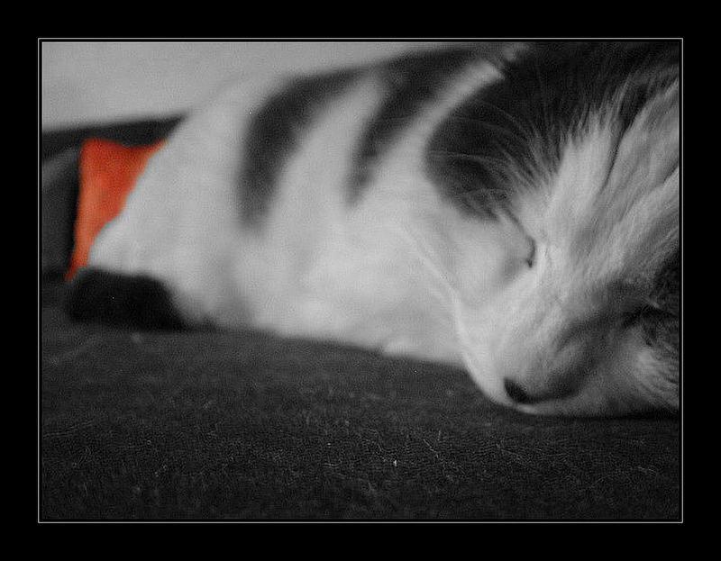 ...~[sleep]~...