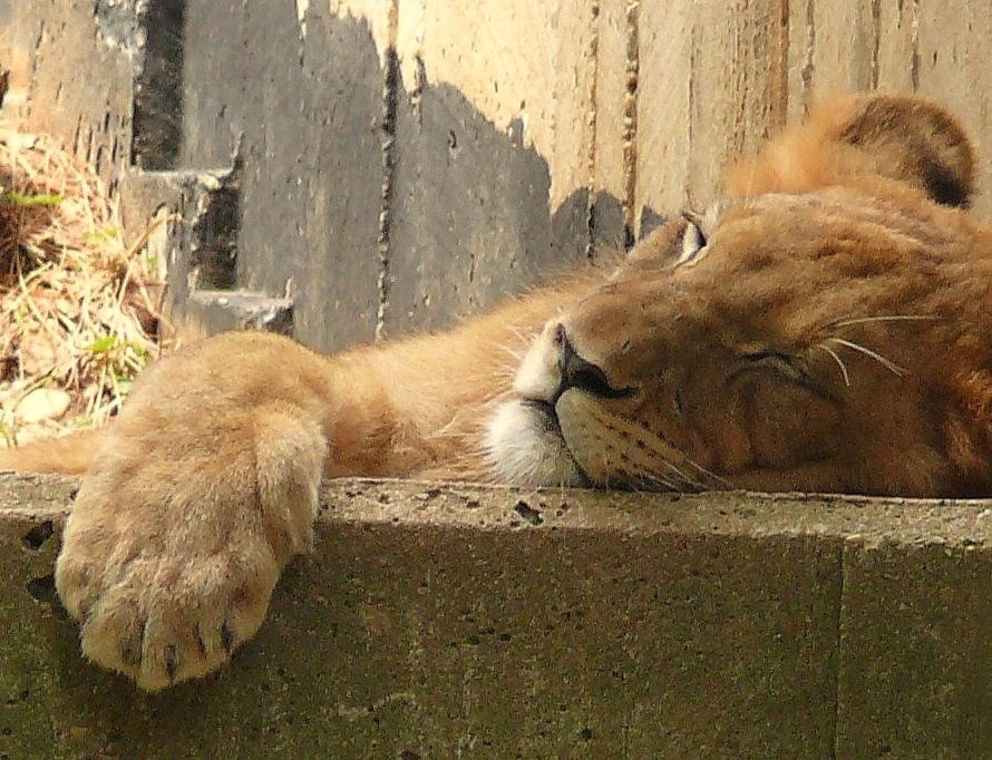 """""""Sleeper"""""""