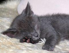 sleepin' beauty...