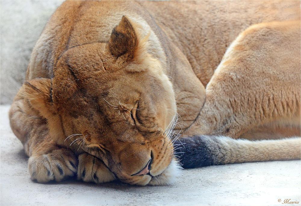 > SLEEPING