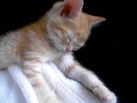 Sleeping :-)