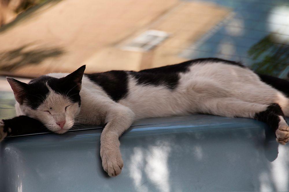 Sleeping cat by Majid mehraban