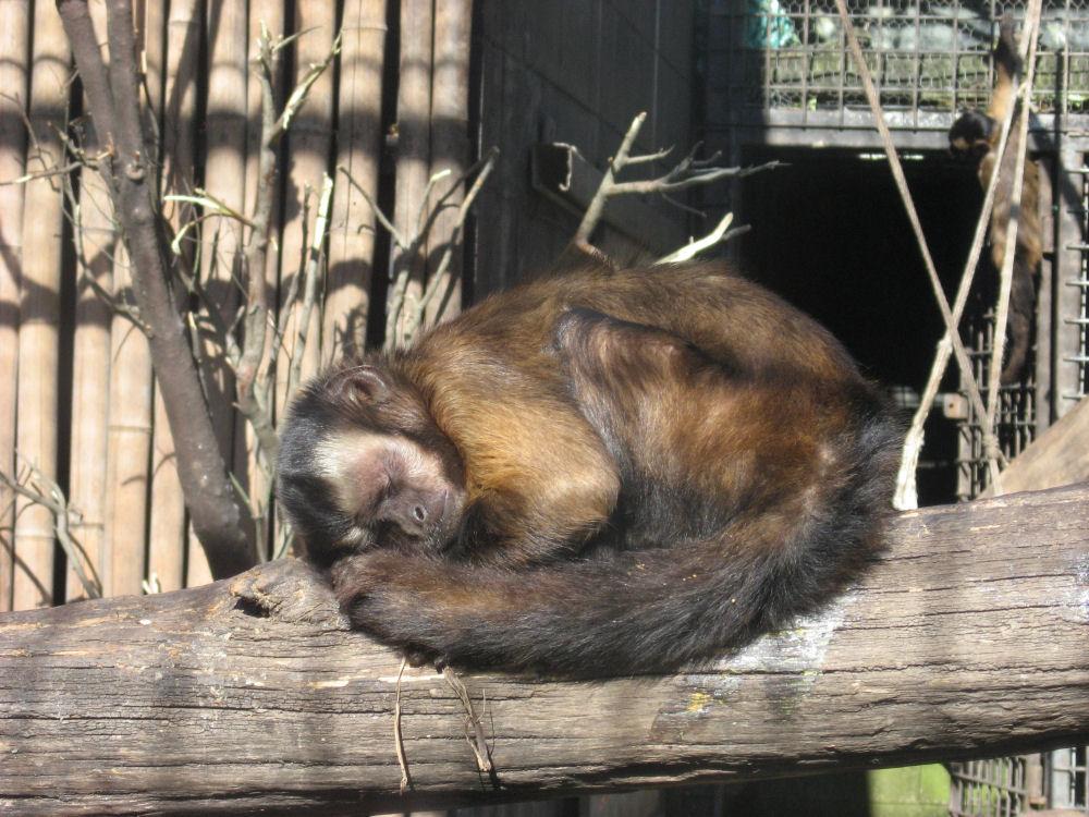 sleeping in the sun