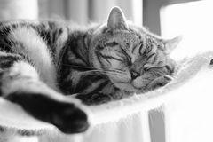Sleeping Quax