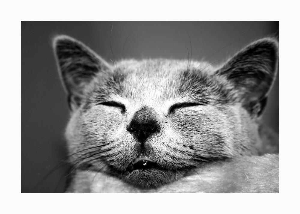 *+*sleeping Tiger*+*