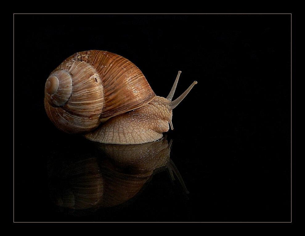 slow & slimy