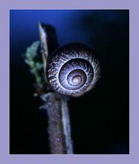 SLR-Snail