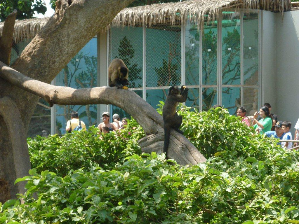 Small Monkeys in the Zoo