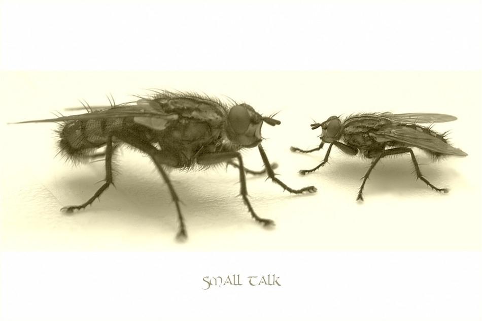 ~ Small Talk ~