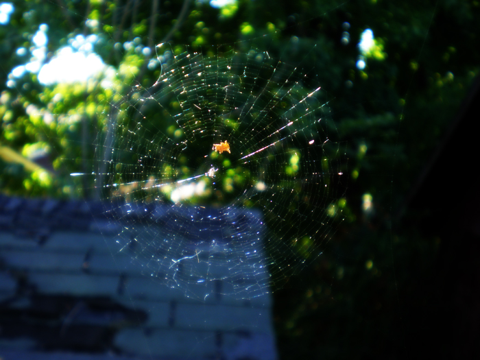 Small Web