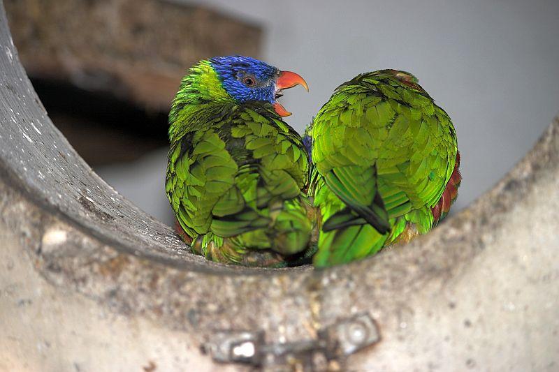 Smettila di fare il pappagallo con tutte