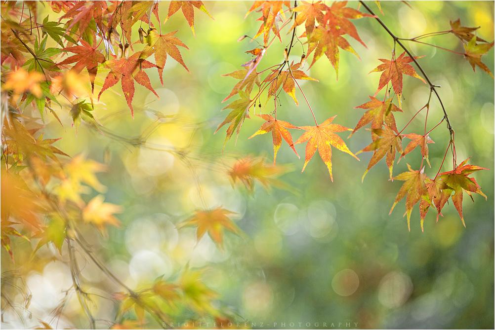 smiling autumn..........