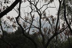 Smog in Chongqing