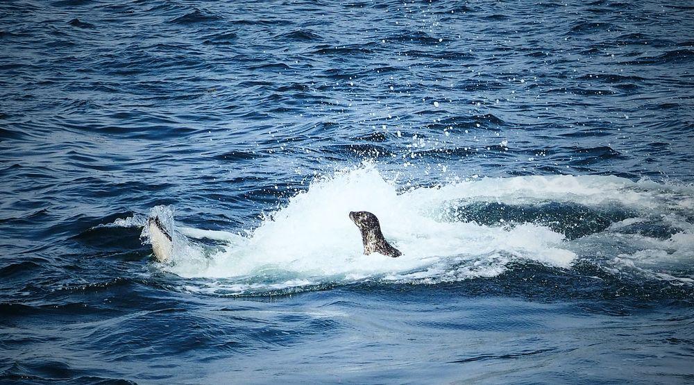 Snack der Wale...