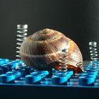 Snail Jail
