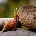 snail up